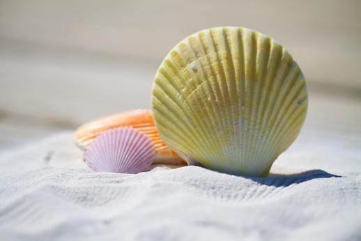 shells-792912
